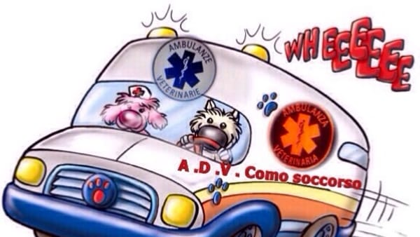 como-soccorso-veterinario-ambulanza