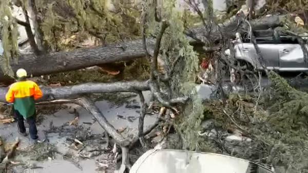Il video dell'albero caduto in Municipio: interviene la protezione civile