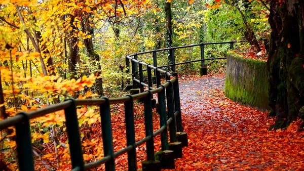 Colori e sapori d'autunno nell'antico borgo di Asso