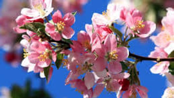 Festa di primavera in giro per Asso