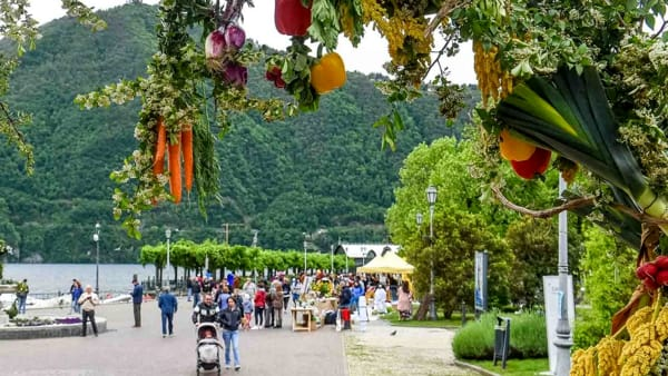 """Cernobbio: """"Qui c'è campo"""": prodotti a km zero, degustazioni di olio e di vino, caccia al tartufo nero del Lago di Como"""